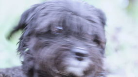 Cão sujo