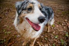 Cão sujo Imagens de Stock