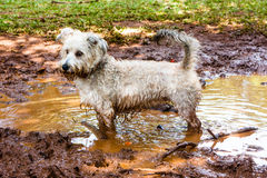 Cão sujo Foto de Stock Royalty Free
