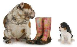 Cão sujo que olha o cão limpo Imagens de Stock