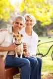 Cão superior dos pares fotografia de stock royalty free