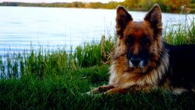 Cão surpreendente Imagens de Stock Royalty Free