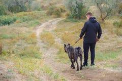 Cão surpreendente que anda com proprietário fora Conceito do animal de estimação Foto de Stock Royalty Free