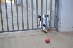 Cão tenaz Foto de Stock