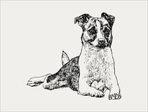 cão tirado mão do retrato, ilustração do vetor ilustração do vetor