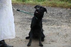 Cão traseiro na caminhada foto de stock