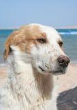 Cão triste Fotografia de Stock Royalty Free