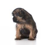 Cão triste Imagem de Stock