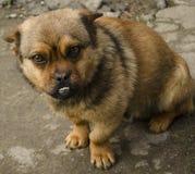 Cão triste foto de stock