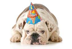 Cão triste do aniversário imagens de stock