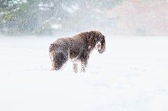Cão triste na neve fotos de stock