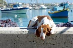 Cão triste na rua com a vila colorida bonita Marsaxlokk no fundo Imagens de Stock