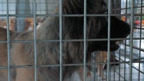 Cão triste no abrigo que espera para ser salvado e adotado à casa nova Abrigo para o conceito dos animais video estoque