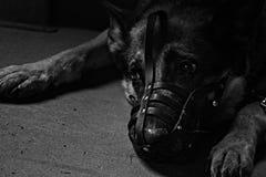 Cão triste sozinho preto e branco de B&W BW com o focinho no abrigo do cão miserável imagens de stock royalty free
