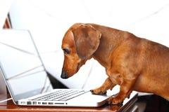 Cão usando o computador Fotografia de Stock