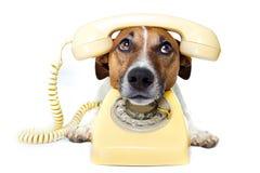 Cão usando um telefone amarelo Imagem de Stock