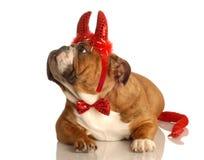 Cão vestido acima como do diabo fotografia de stock