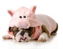 Cão vestido acima como um porco fotos de stock