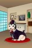 Cão vestido acima em um equipamento extravagante Imagem de Stock