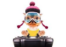 Cão vestido como o jogo do esquiador na almofada do jogo Fotos de Stock Royalty Free