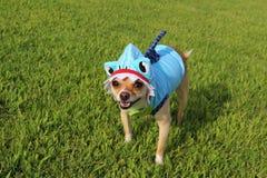 Cão vestido como o tubarão Imagem de Stock