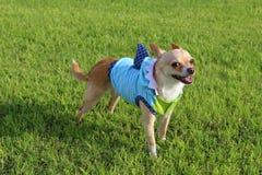 Cão vestido como o tubarão Imagens de Stock Royalty Free