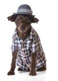 Cão vestido como um homem fotografia de stock