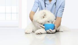 Cão veterinário clinicamente testado do exame dos produtos, com kibb foto de stock royalty free