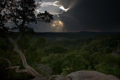 Cèdre et coucher du soleil après douche Images libres de droits