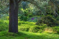 Cèdre et rhododendron Images libres de droits