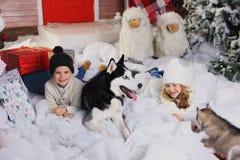 Célébrant Noël avec leur chien à la maison jeu d'enfants avec le chien avec l'arbre de Noël décoré à l'arrière-plan Images libres de droits