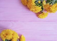 célébration jaune de fleur de chrysanthème sur le fond rose de cadre en bois photos libres de droits