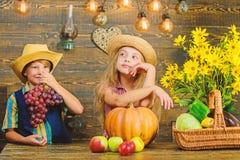 Célébrez le festival de récolte Les enfants s'approchent du fond en bois de légumes Vacances de festival d'école Chute d'école pr photos stock