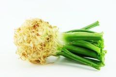 Céleri. Rapaceum de graveolens d'Apium. photographie stock libre de droits