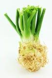 Céleri. Rapaceum de graveolens d'Apium. photographie stock