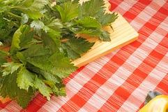 Céleri sur une table de cuisine Photographie stock