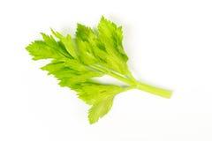 Céleri vert frais Images libres de droits