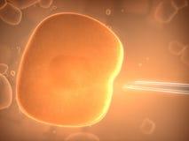 célula Imagen de archivo libre de regalías