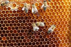 Célula amarilla de la miel Foto de archivo libre de regalías