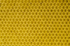 Célula natural 3 de la textura del fondo del oro del peine de la miel Imagenes de archivo