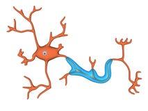 Célula nerviosa fotografía de archivo libre de regalías
