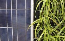 Célula solar e plantas, PS-57399 Fotos de Stock Royalty Free