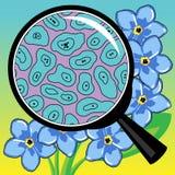 Células biológicas de la flor que un pétalo mira a través de una lupa Fotografía de archivo