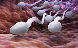 Células de esperma masculinas Imágenes de archivo libres de regalías