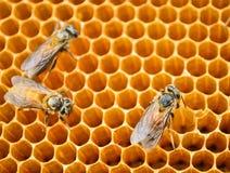 Células de la miel de las abejas Foto de archivo