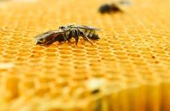 Células de la miel de las abejas Imagen de archivo