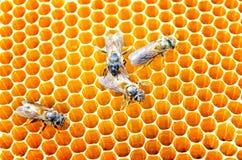 Células de la miel de las abejas Imagenes de archivo