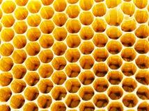 Células de la miel de las abejas Fotos de archivo