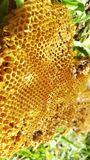 Células de la miel en árbol Foto de archivo