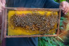 Células de la miel y abejas de trabajo Fotografía de archivo libre de regalías